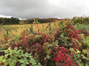 Leelanau Vineyards